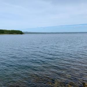 新子アオリイカ 釣れる場所は釣れるんだな・・・(石川県 内浦)エギング