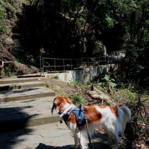 GO TO 海🌊③ ~犬と鋸山~