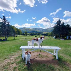 犬連れ北海道の旅③完 〜富良野で偶然が重なる〜