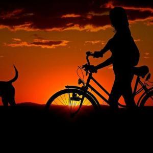 バイクの任意保険に入ろうか検討したけど辞めた!期待値が低すぎるが故