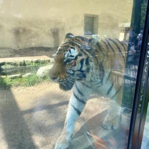 動物園に行きました。