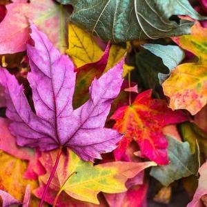 9月22日 きょう一日の氣めぐり 秋分の日