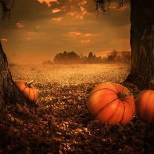 10月30日 きょう一日の氣めぐり