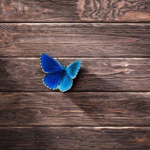 6/18~7/12【水星逆行】社会的な居場所を見直し、より魂を輝かせる未来へ★