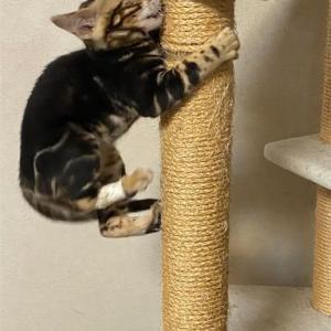 *子猫、元気過ぎてやらかす…