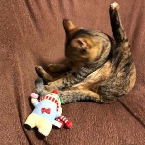 *我が家の猫達は、ふなっしーがお好き!