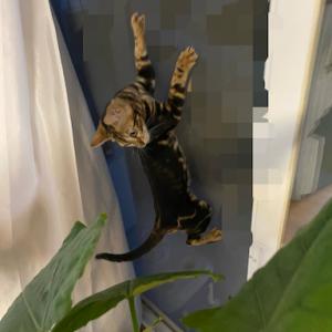 *石田ゆり子さん家の子猫ちゃんが可愛い!