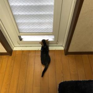 *待ち猫、ついにキタル!