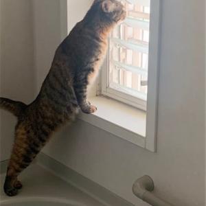 *姉さん・・・窓辺で黄昏る。。