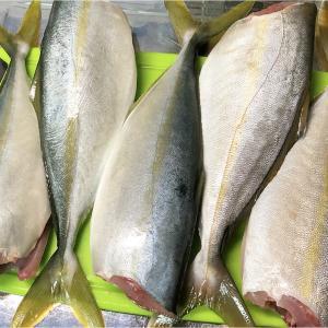 【貧乏飯】魚5匹で5品作ってみた。