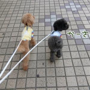 お散歩気持ちいいね〜