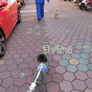 お散歩〜カモだよ!