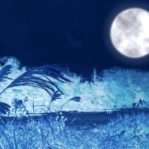 牡羊座満月のビューティアクション♪ アストロロジー美容術 頭皮ケア ホリスティック ビューティ