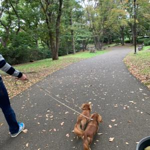 秋の公園をおさんぽ