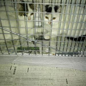 残り2頭の子猫の捕獲成功