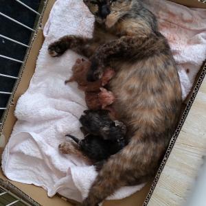 赤ちゃん産まれました