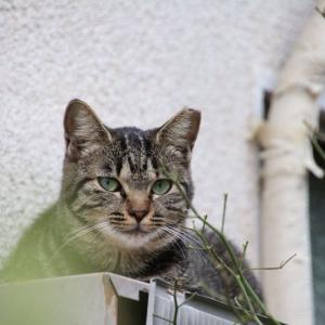庭の猫一族