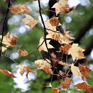 うっすら秋色
