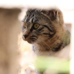 小柄なM猫