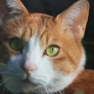 新顔の茶トラ白猫ちゃん