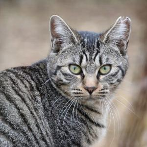 庭のキジトラ猫ちゃん