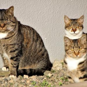 親子の猫ちゃんたち