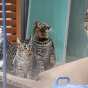 朝食を待つ猫ちゃんたち