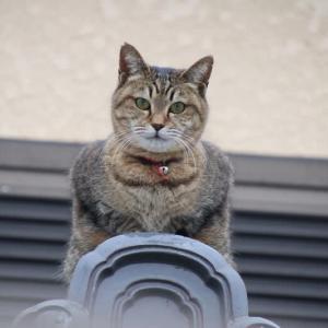 物見猫ちゃん
