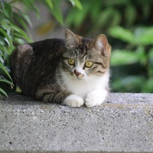 門番の猫ちゃん