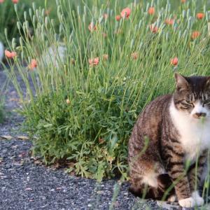 猫ちゃんのソーシャル・ディスタンス