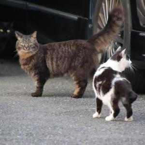 三匹の密接な猫ちゃん