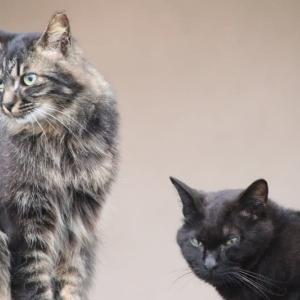 三匹の密な猫ちゃんたち