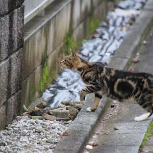 ためらい猫ちゃん