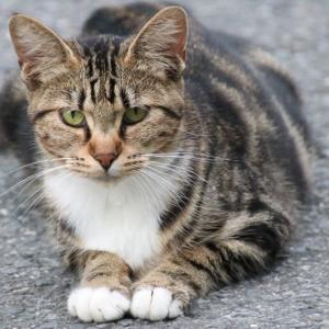 最近よく会う猫ちゃん