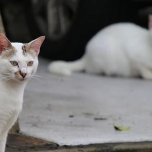 猫のソーシャル・ディスタンス