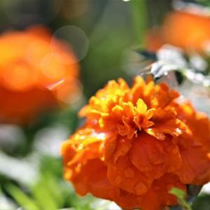 雨上がりの花々