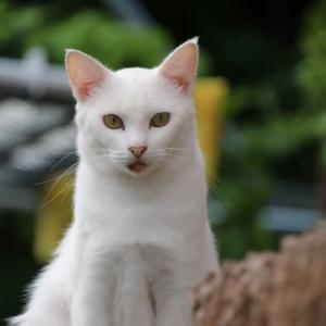 白猫さんを二匹