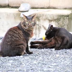 猫ちゃんの尻尾対決