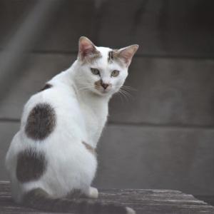 丸を背負った猫ちゃん