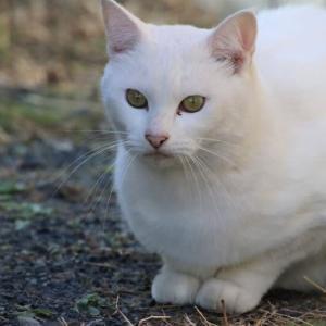 白猫さんを至近距離で