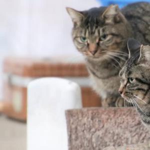 エサを待つ猫ちゃん