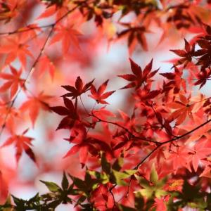 埼玉、嵐山渓谷の紅葉