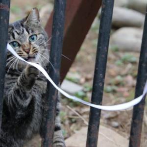 よその猫ちゃんと遊ぶ