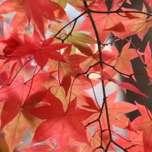 続・森林公園の紅葉