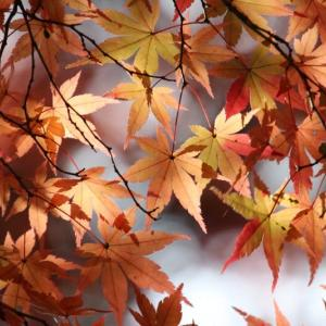 続・嵐山渓谷の紅葉