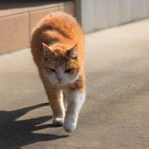 猫ちゃんが超接近