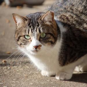 愛嬌のある猫ちゃん