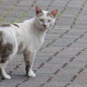 初めて出会う猫どうし
