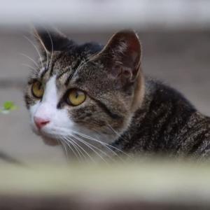 街の猫ちゃんたち