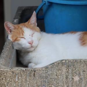流し台の猫ちゃん